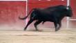 Постер, плакат: Corrida de toros toro bravo espa