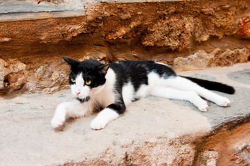 Greek stray cat