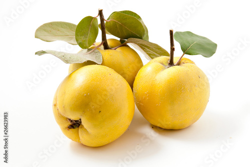 Fresh yellow quinces