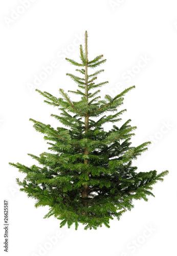 christbaum ohne schmuck auf wei stockfotos und. Black Bedroom Furniture Sets. Home Design Ideas