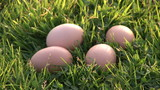Four eggs on the grass