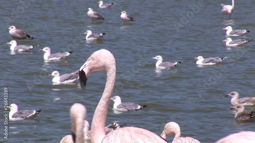 Flamingos looking at other birds in the lake