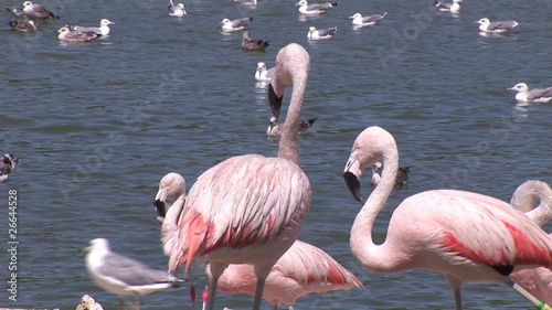 Herons and flamingos standing by the lake