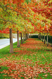 Colorful trees lining boulevard in autumn poster