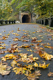 Tunnel on Oneonta Gorge Hiking Trail poster