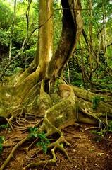 Raices de ábol tropical