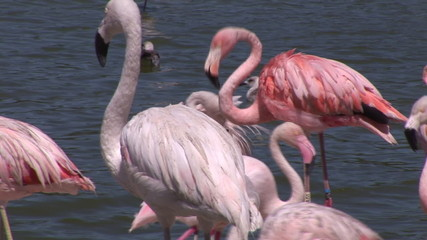 Flamingos and birds in a lake
