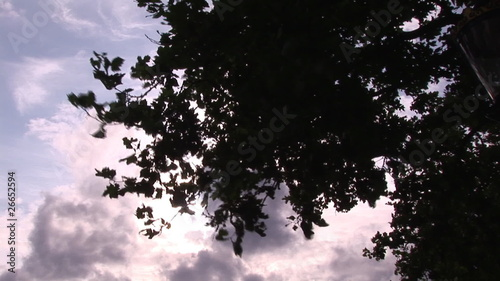 Top of a tree in the wind with sky in background