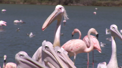 Close-up of herons and flamingos in front of a river