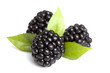 Close-up view of blackberries on a white background