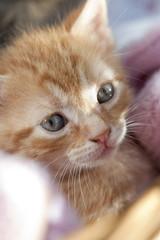 Katzenbaby Augen