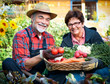 Senior couple with  a basket of harvested vegetables