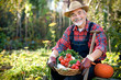Leinwanddruck Bild - Senior gardener with  a basket of harvested vegetables