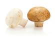 Two champignon mushrooms on white background