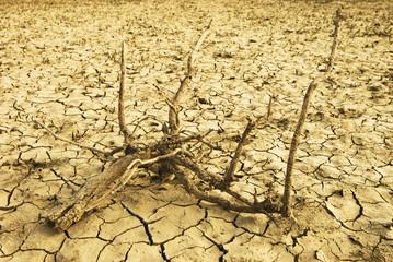 arbusto su terreno arido