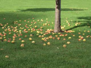 pommes, automne en Normandie