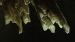 Close up of enlightened stalagmites in a dark cave