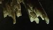 Close up of enlightened stalagmites in a dark cave