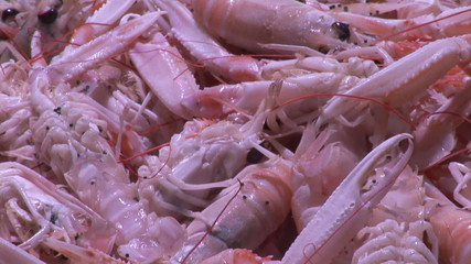 Vision of a prawn display in a fish store