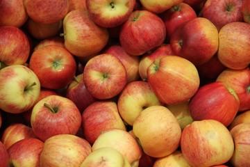 Pommes en octobre