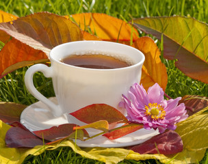 cup of tea and still life from colored fall leaves