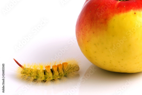Caterpillar and Apple