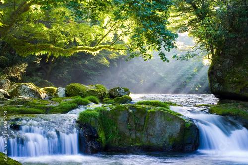 原生林と渓流と光芒 Virgin Forest And Shaft Beam Of Light