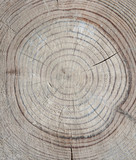 Annual rings on cut tree