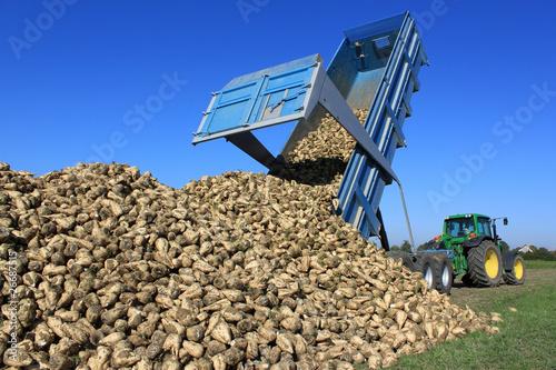 Récolte de betteraves - 26687515