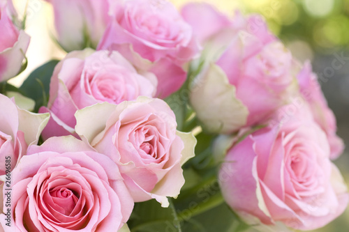 Papiers peints Roses Beautiful pink roses background
