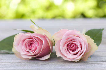 Beautiful pink roses duo