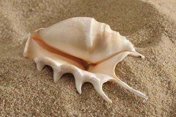 Schnecke Muschel