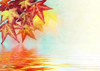 Autumn Leaf Reflections