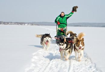 dog team at work