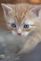 kleines Katzenbaby