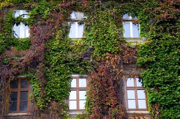 Zugewachsene Fenster - Wawel - Krakau