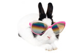 rabbit in Sunglasses