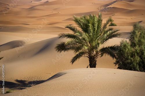 Oase in der Wüste, Marokko, Sahara - 26727563