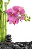 Fototapeta storczyk - kwiat - Roślinne