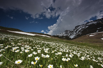 Flowers on mountains during a sunny day