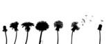 dandelion life chain