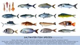 Fish species saltwater clasification isolated on white poster