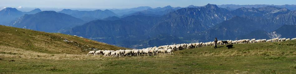 Panorama Schafherde mit Hirte auf dem Monte Baldo