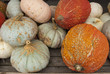 Squash, gourds and pumpkins