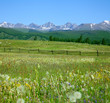 Green summer pasture