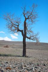 bare tree in desert landscape