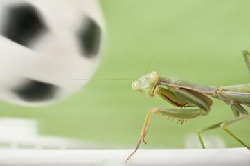 Mantis religiosa jugando al futbol 4