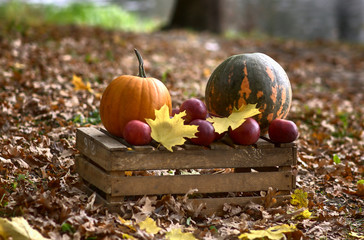 pumpkins and apples in park - autumn