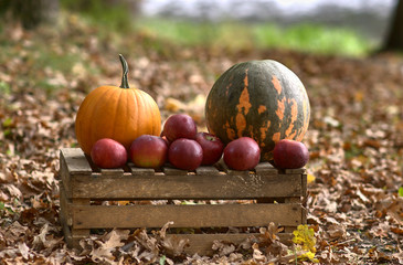 pumpkins and apples in park
