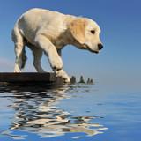 Fototapeta woda - jezioro - Zwierzę domowe